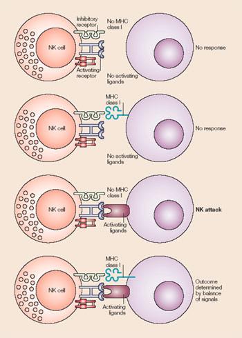 Механизм действия Аллокина-